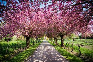 Selbstheilungskräfte fördern durch Therapie und Coachings in Aargau