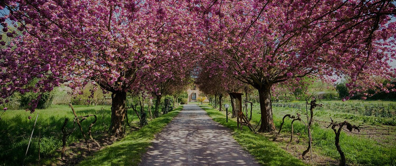 Coaching mit Hypnotherapie für ganzheitliche Heilung in Aargau